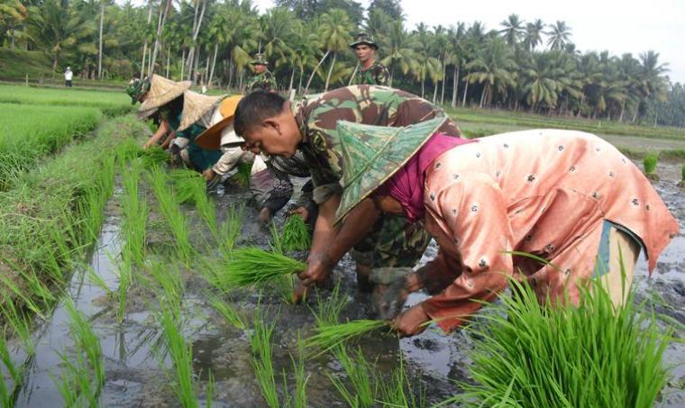 DPR RI Setuju TNI Ikut Serta Awasi Harga Pangan