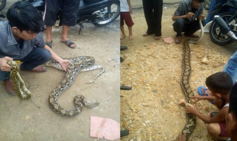 Warga saat menunjukan ular hasil tangkapan. (Foto: TitikNOL)