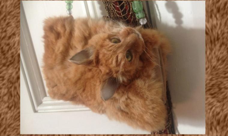 Tas terbuat dari kucing utuh, yang masih lengkap bersama kepala serta bulunya. (Dok: dailydot)