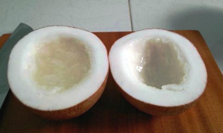 Ilustrasi buah kelapa. (Dok: vovworld)