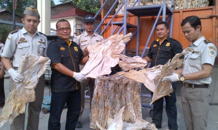 Kepala BKP Kelas II Cilegon Bambang Haryanto saat menunjukan barang bukti kulit sapi yang diduga ilegal. (Foto: TitikNOL)