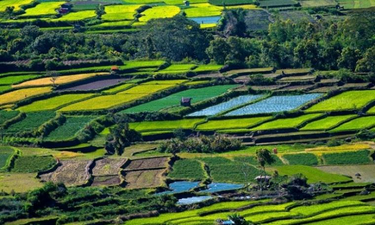 Ilustrasi lahan pertanian. (Dok: umy)