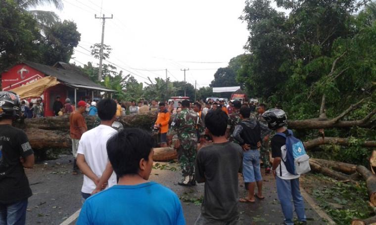 Ditonton warga, petugas BPBD Lebak yang dibantu sejumlah anggota TNI saat mengevakuasi pohon tumbang di ruas jalan Pandeglang- Rangkasbitung. (Foto: TitikNOL)