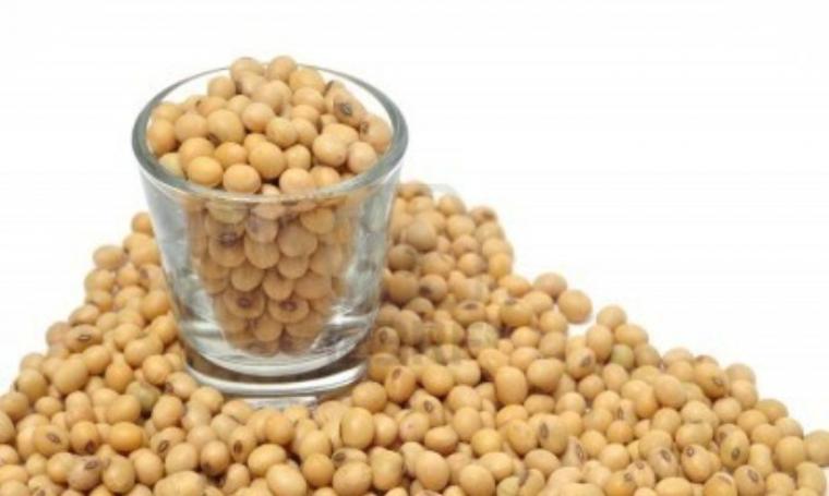 Ilustrasi kacang kedelai. (Dok: Bimbingan)