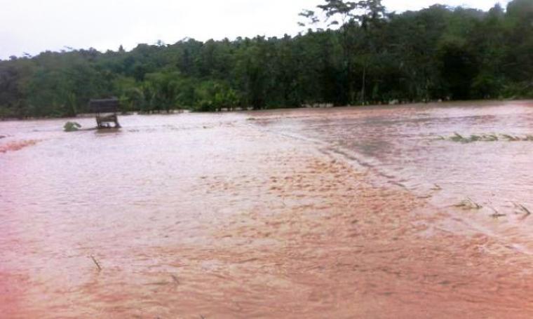 Kondisi banjir yang menggenangi persawahan di Kecamatan Bayah. (Foto: TitikNOL)
