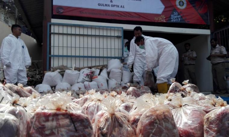 Sebanyak 2.806,4 kilogram daging celeng dan 770,5 kilogram gulma akan dimusnahkan BKP Kelas II Cilegon. (Foto: TitikNOL)