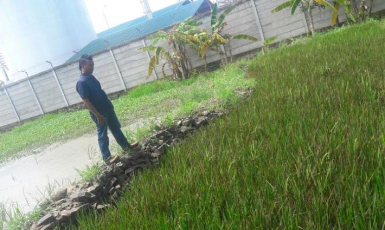 Warga saat melihat tanaman padi yang diduga tercemar bahan kimia PT Dover Chemical. (Foto: Istimewa)