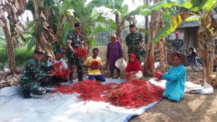Komando rayon militer (Koramil) 0315 Bayah dan warga saat menunjukan hasil panen cabai merah siap jual. (Foto: TitikNOL)