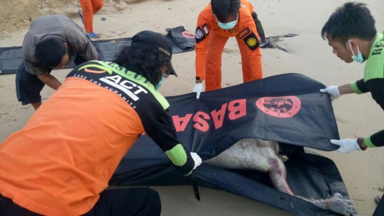 Jasad Farhan korban terseret ombak pantai Ciantir Sawarna, ditemukan tewas dalam kondisi mengenaskan, tidak jauh dari lokasi saat tenggelam. (Foto: ist)