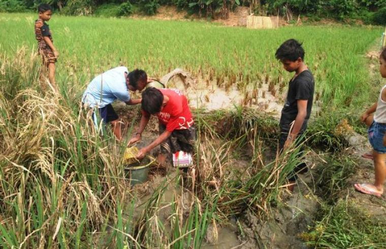 Petani di Desa Malabar, Kecamatan Cibadak gagal panen akibat serangan hama wereng dan tikus. (Foto: TitikNOL)