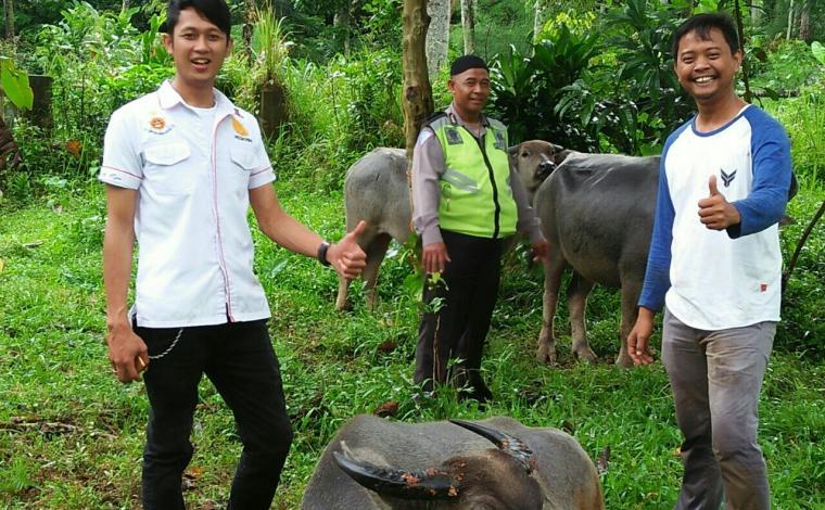 Anggota Polsek Cipanas saat mengamankan barang bukti ternak kerbau hasil curian. (Foto: Ist)