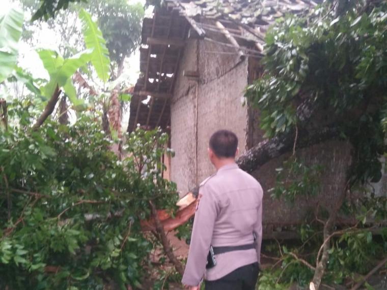 Anggota Polsek Cimarga saat tengah berada di lokasi pohon tumbang dan memeriksa kerusakan rumah. (Foto: Ist)