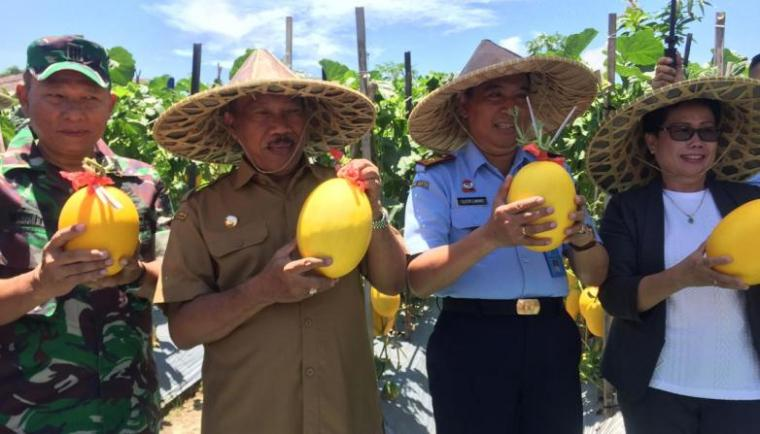 Walikota Cilegon, Edi Ariadi saat panen melon madu di halaman Lapas Kelas III Cilegon. (Foto: TitikNOL)