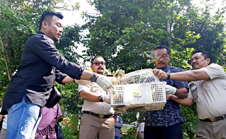 Kepala Balai Karantina Kelas II Cilegon saat melepasliarkan ratusan ekor burung di Cagar Alam Rawa Danau Serang. (Istimewa).