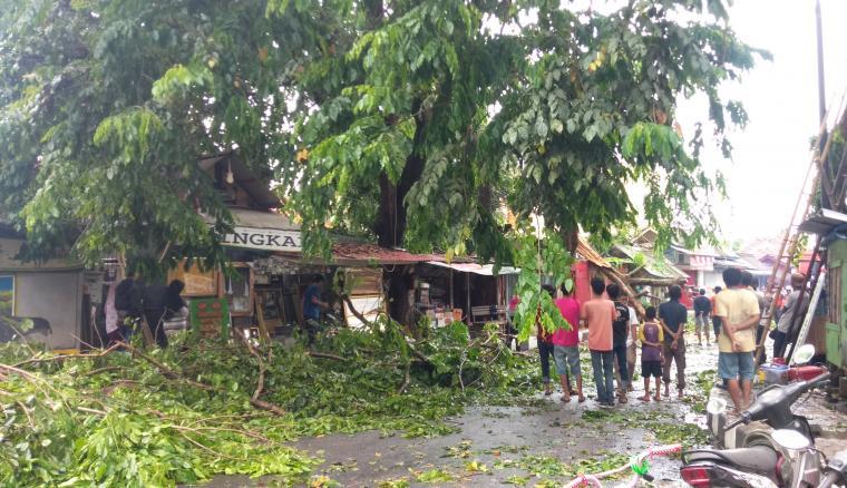Pohon tumbang di Jalan Sunan Bonang, Kampung Sawah, Kelurahan Muara Ciujung Barat, Kecamatan Rangkasbitung. (Foto: TitikNOL)