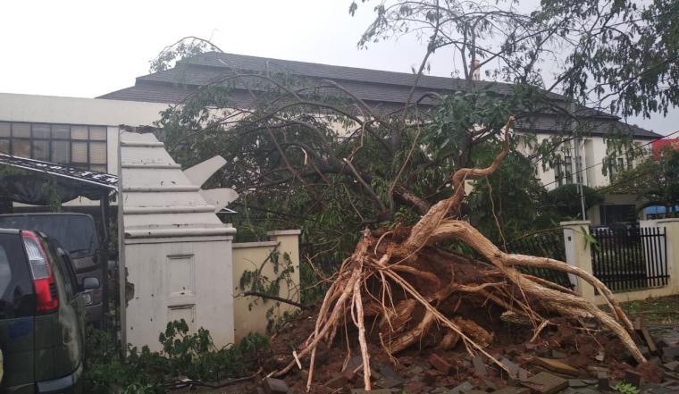 Pohon tumbang menimpa pagar salah satu kantor di KP3B, Curug, Kota Serang. (Foto: TitikNOL)