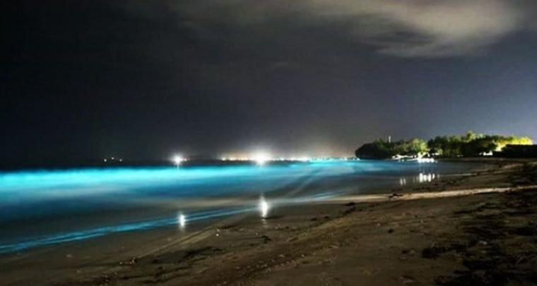 Fenomena biolumnescence. (Dok: Rmol Lampung)