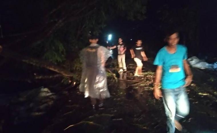 Pohon tumbang yang menimpa di jalan Salikur - Carenang, Kecamatan Kibin. (Foto: TitikNOL)