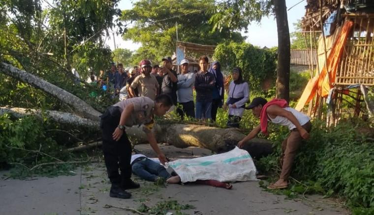 Pohon tumbang di Kampung Cipaeh Gebang, Desa Gebang, Kecamatan Kresek, Kabupaten Tangerang. (Foto: Istimewa)
