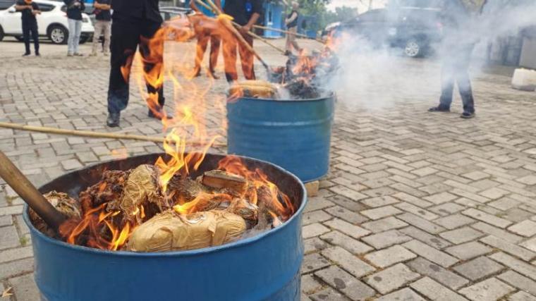 Pemusnahan barang bukti narkotika jenis ganja dengan cara dibakar. (Foto: TitikNOL)