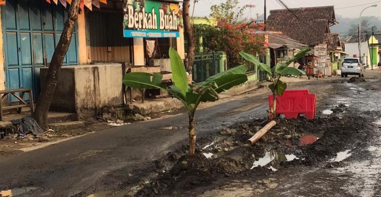 Aksi tanam pohon pisang di tengah jalan rusak. (Foto: TitikNOL)