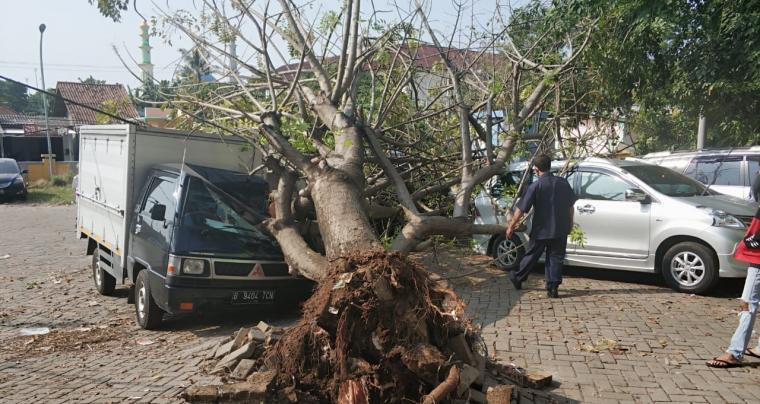 Mobil yang tertimpa pohon tumbang di Pasar Blok F Cilegon. (Foto: TitikNOL)