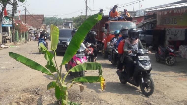 Pohon pisang menancap ditengah jalan raya Arief Rahman Hakim, perempatan Sumurbuang, Kecamatan Cibadak. (Foto: TitikNOL)