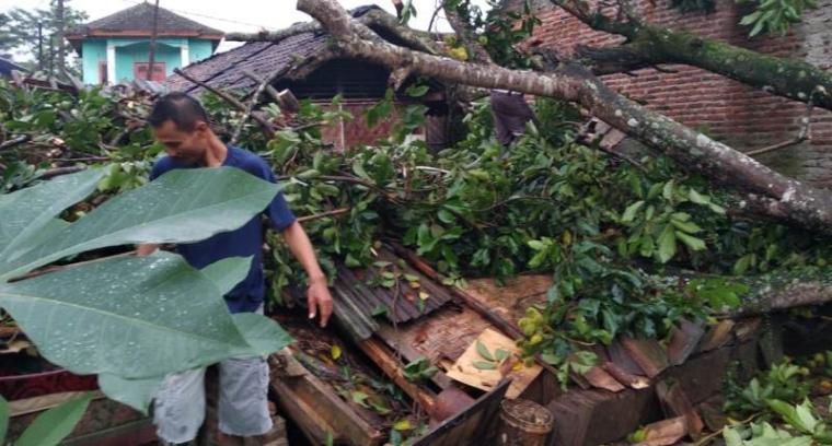 Pohon tumbang yang menipa rumah warga Kampung Ketug Tengah Rt 03/Rw 06, Desa Citeras, Kecamatan Rangkasbitung. (Foto: TitikNOL)