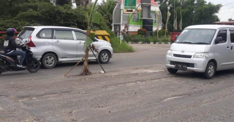 Tanaman pisang yang berdiri di tengah jalan Raya Serang-Jakarta sebagai bentuk kekecewaan warga yang jalannya tak kunjung diperbaiki. (Foto: TitikNOL)